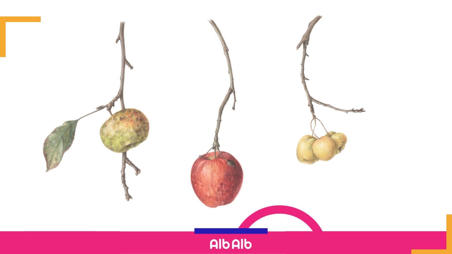 Atelier intensiv de ilustratie botanica – fructe de toamna